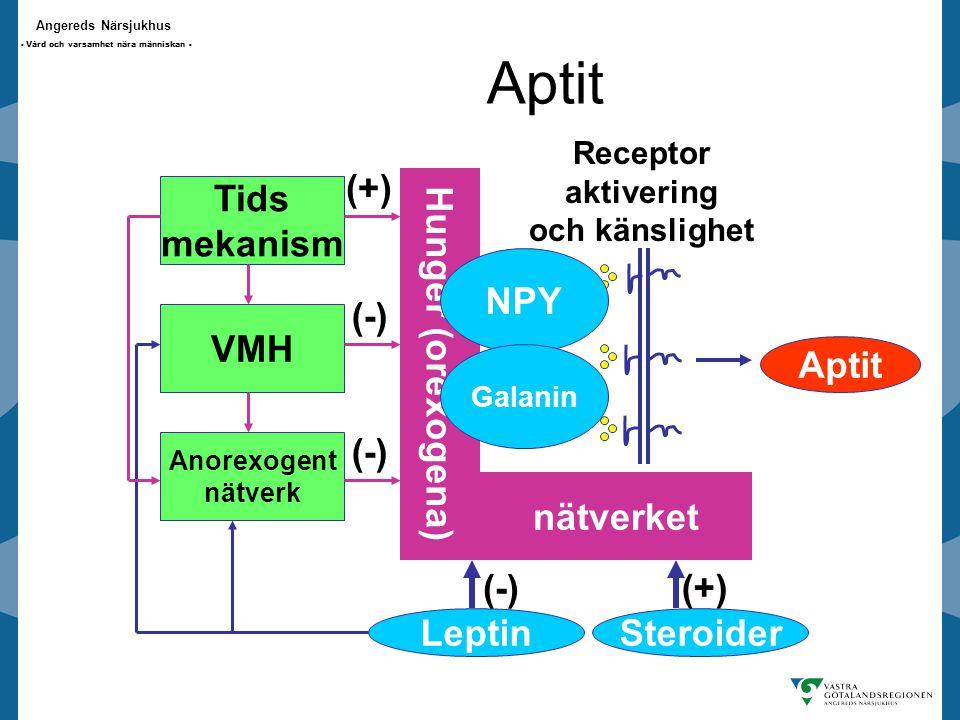 Angereds Närsjukhus - Vård och varsamhet nära människan - Aptit Hunger (orexogena) nätverket Aptit Leptin (-) Steroider (+) Tids mekanism VMH Anorexogent nätverk (+) (-) Receptor aktivering och känslighet NPY Galanin