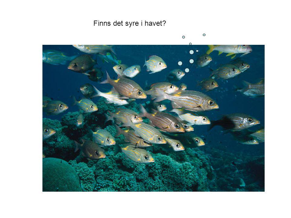Finns det syre i havet?