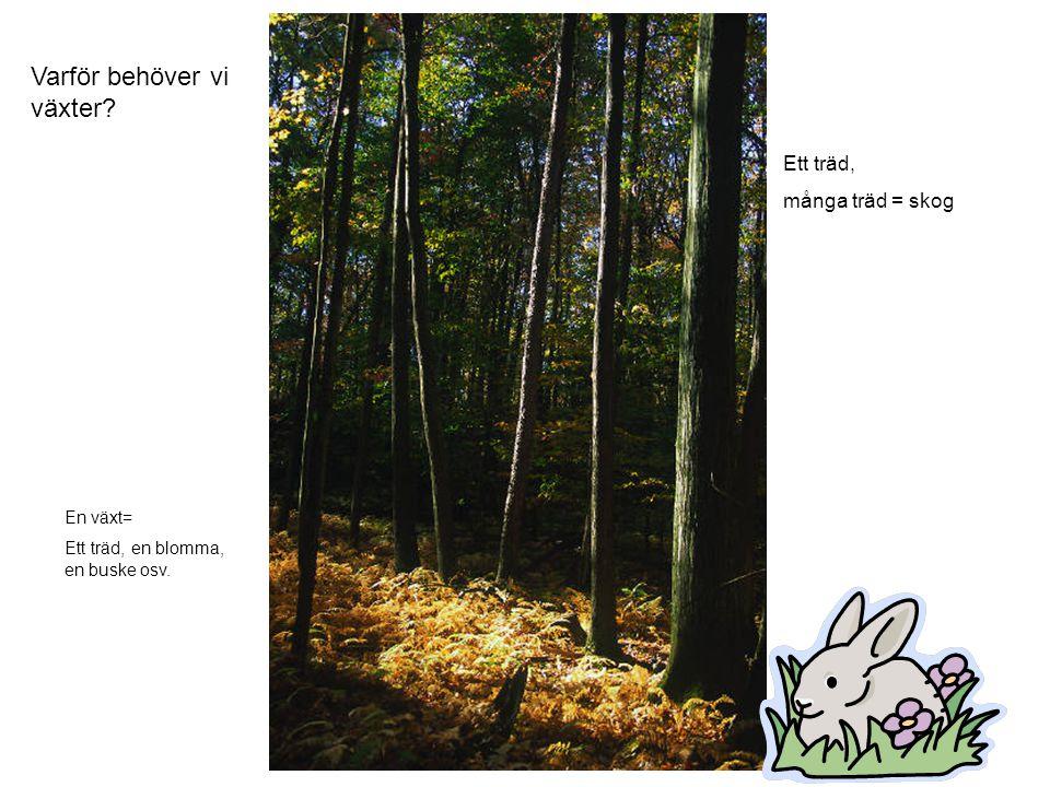 Varför behöver vi växter? Ett träd, många träd = skog En växt= Ett träd, en blomma, en buske osv.