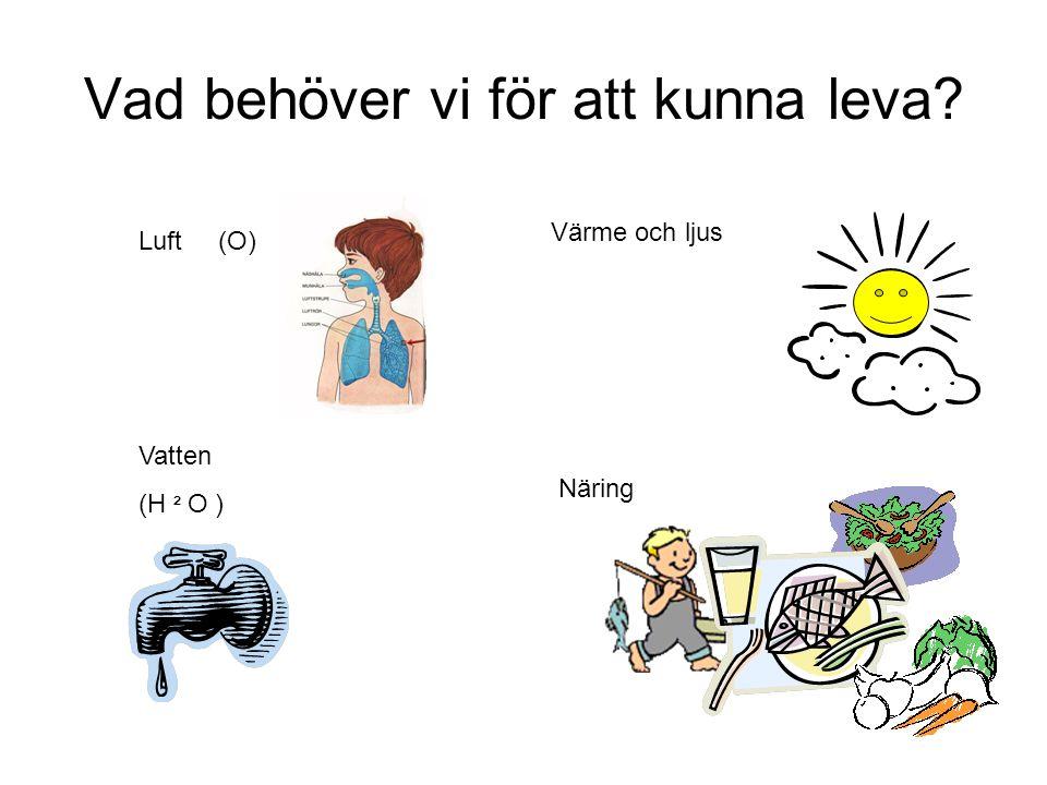 Vad behöver vi för att kunna leva? Luft (O) Vatten (H ² O ) Värme och ljus Näring