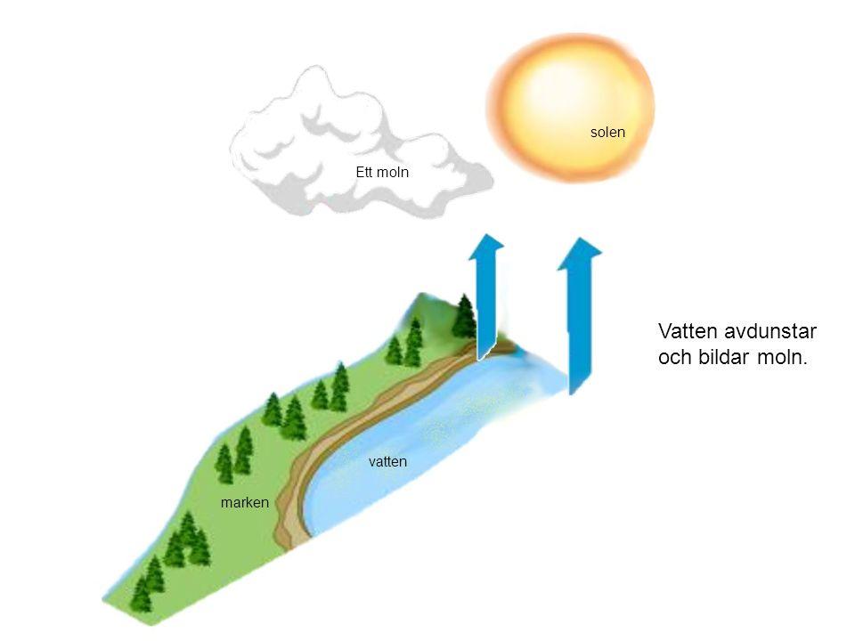 Vatten avdunstar och bildar moln. vatten marken solen Ett moln