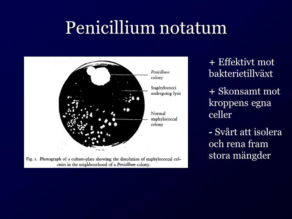 Penicillium notatum + Effektivt mot bakterietillväxt + Skonsamt mot kroppens egna celler - Svårt att isolera och rena fram stora mängder
