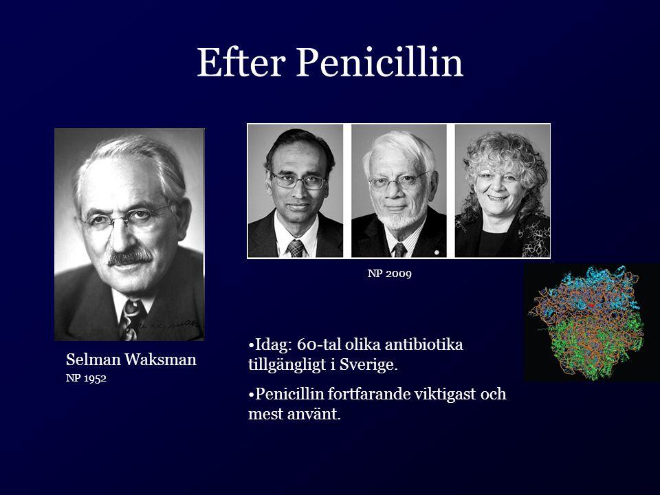 Efter Penicillin Selman Waksman NP 1952 Idag: 60-tal olika antibiotika tillgängligt i Sverige. Penicillin fortfarande viktigast och mest använt. NP 20