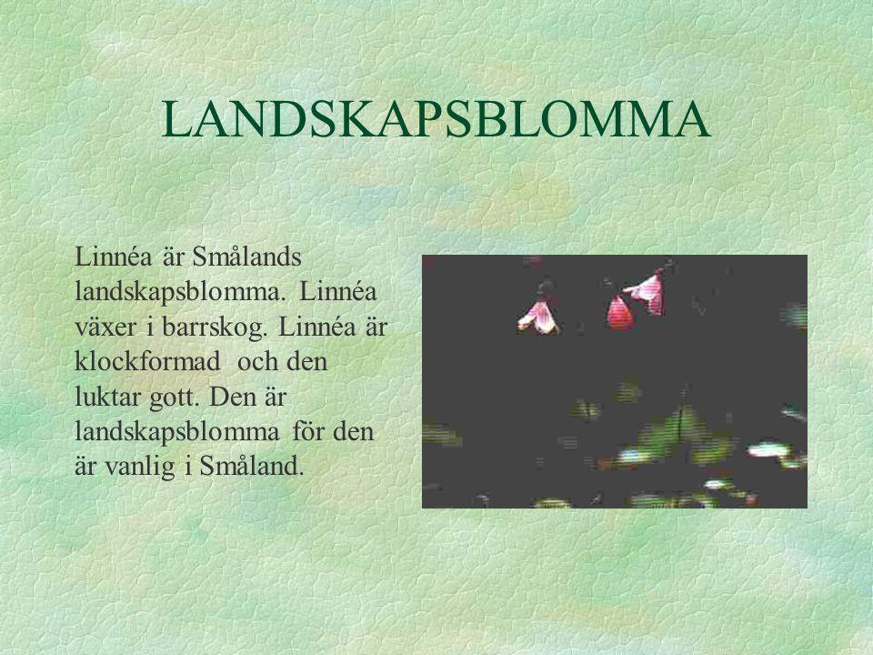LANDSKAPSBLOMMA Linnéa är Smålands landskapsblomma.