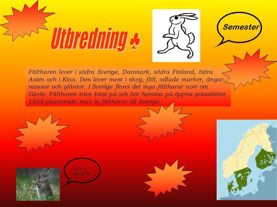 Fältharen lever i södra Sverige, Danmark, södra Finland, östra Asien och i Kina. Den lever mest i skog, fält, odlade marker, ängar, mossar och gläntor