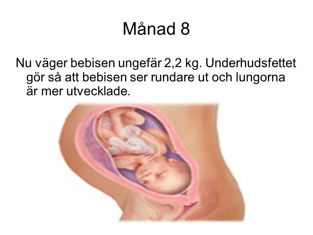 Månad 8 Nu väger bebisen ungefär 2,2 kg. Underhudsfettet gör så att bebisen ser rundare ut och lungorna är mer utvecklade.