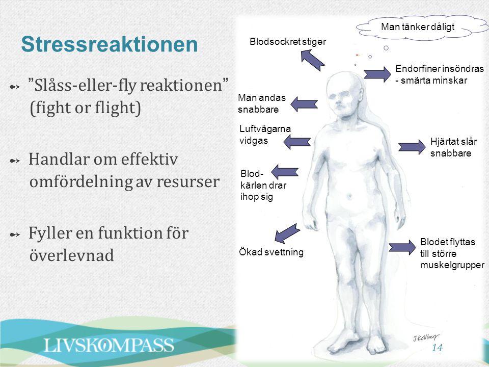 14 Stressreaktionen Blodsockret stiger Man tänker dåligt Endorfiner insöndras - smärta minskar Hjärtat slår snabbare Blodet flyttas till större muskel