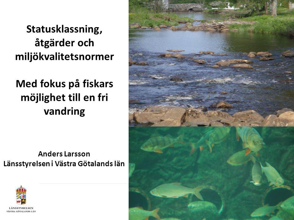 Statusklassning, åtgärder och miljökvalitetsnormer Med fokus på fiskars möjlighet till en fri vandring Anders Larsson Länsstyrelsen i Västra Götalands län