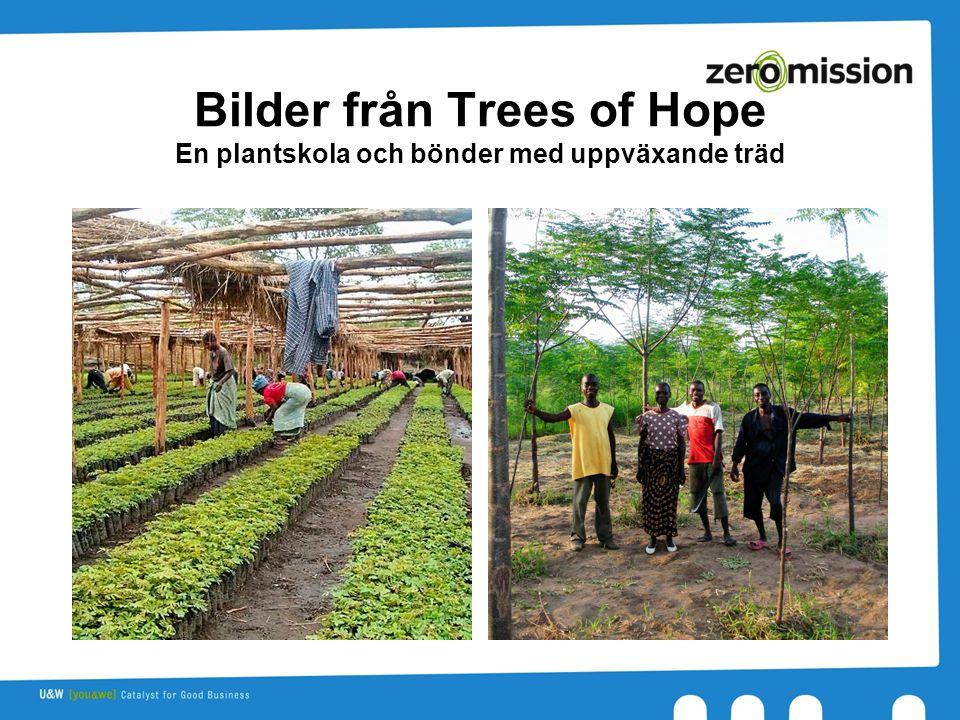 Bilder från Trees of Hope En plantskola och bönder med uppväxande träd