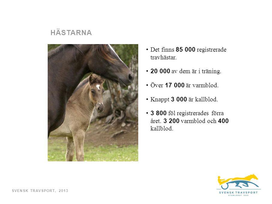 HÄSTARNA Det finns 85 000 registrerade travhästar.