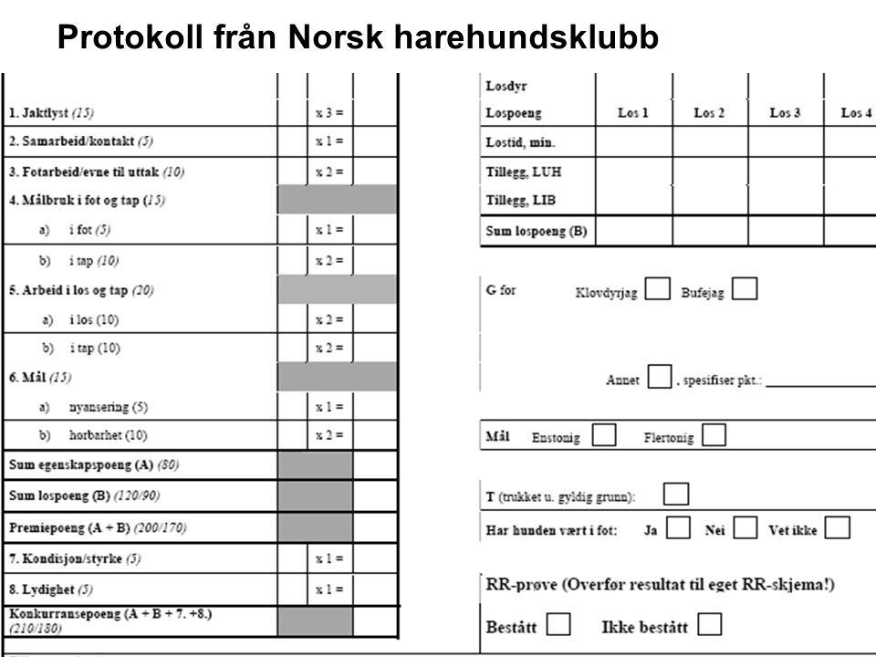 Protokoll från Norsk harehundsklubb