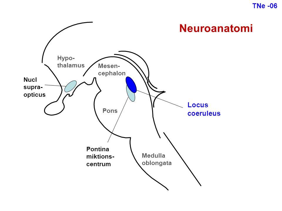 Locus coeruleus Pons Hypo- thalamus Medulla oblongata Mesen- cephalon Pontina miktions- centrum Nucl supra- opticus Neuroanatomi TNe -06
