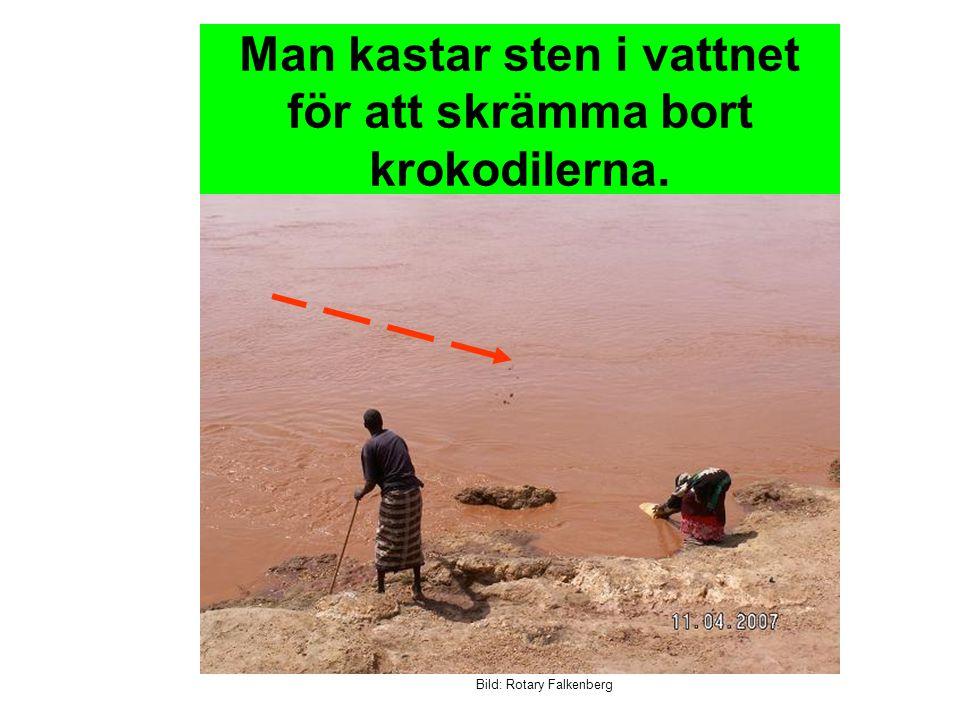 Bild: Rotary Falkenberg Man kastar sten i vattnet för att skrämma bort krokodilerna.