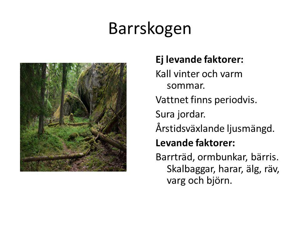 Barrskogen Ej levande faktorer: Kall vinter och varm sommar. Vattnet finns periodvis. Sura jordar. Årstidsväxlande ljusmängd. Levande faktorer: Barrtr
