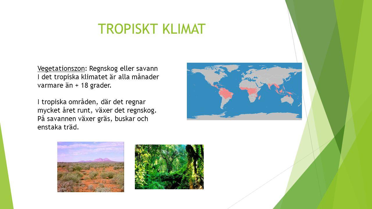 TROPISKT KLIMAT Vegetationszon: Regnskog eller savann I det tropiska klimatet är alla månader varmare än + 18 grader. I tropiska områden, där det regn
