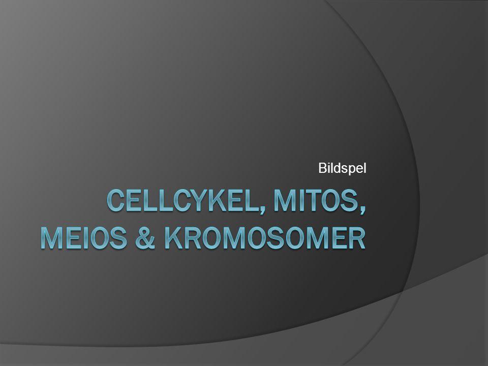 Cellcykeln  Celler bildas ur andra celler  Från bildning – celldelning = Cellcykel  http://www.cellsalive.com/cell_cycle.htm http://www.cellsalive.com/cell_cycle.htm