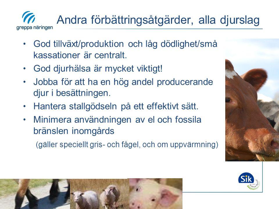 Andra förbättringsåtgärder, alla djurslag God tillväxt/produktion och låg dödlighet/små kassationer är centralt. God djurhälsa är mycket viktigt! Jobb