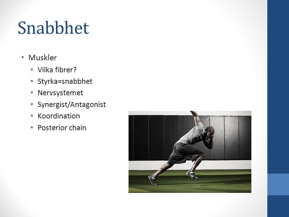 Muskler Vilka fibrer? Styrka=snabbhet Nervsystemet Synergist/Antagonist Koordination Posterior chain Snabbhet
