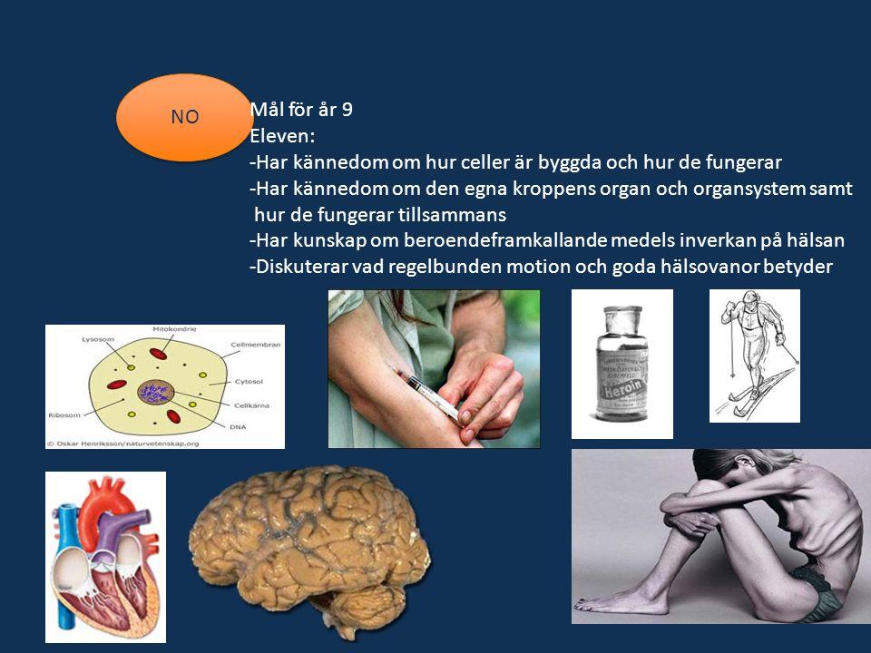 NO Mål för år 9 Eleven: -Har kännedom om hur celler är byggda och hur de fungerar -Har kännedom om den egna kroppens organ och organsystem samt hur de fungerar tillsammans -Har kunskap om beroendeframkallande medels inverkan på hälsan -Diskuterar vad regelbunden motion och goda hälsovanor betyder