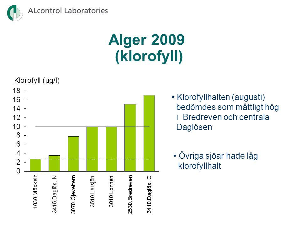 Alger 2009 (klorofyll) Klorofyllhalten (augusti) bedömdes som måttligt hög i Bredreven och centrala Daglösen Övriga sjöar hade låg klorofyllhalt