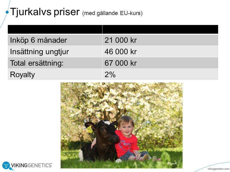 Tjurkalvs priser (med gällande EU-kurs) Inköp 6 månader21 000 kr Insättning ungtjur46 000 kr Total ersättning:67 000 kr Royalty2%