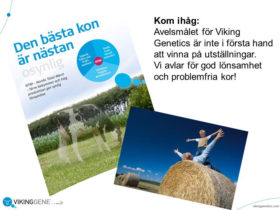 Kom ihåg: Avelsmålet för Viking Genetics är inte i första hand att vinna på utställningar.