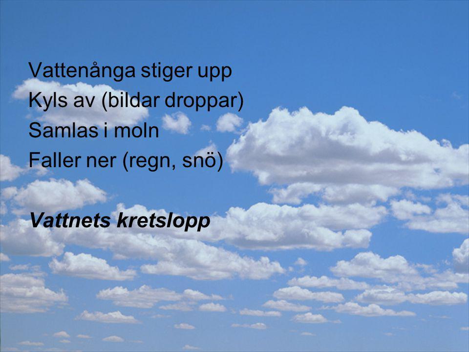 Vattenånga stiger upp Kyls av (bildar droppar) Samlas i moln Faller ner (regn, snö) Vattnets kretslopp