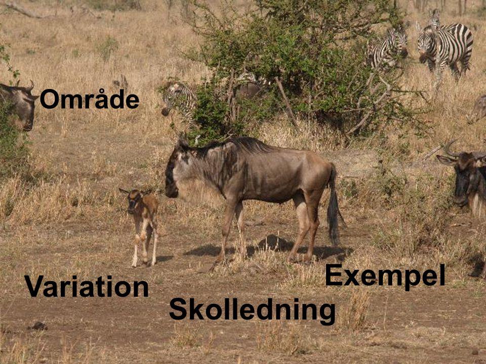 Område Exempel Skolledning Variation