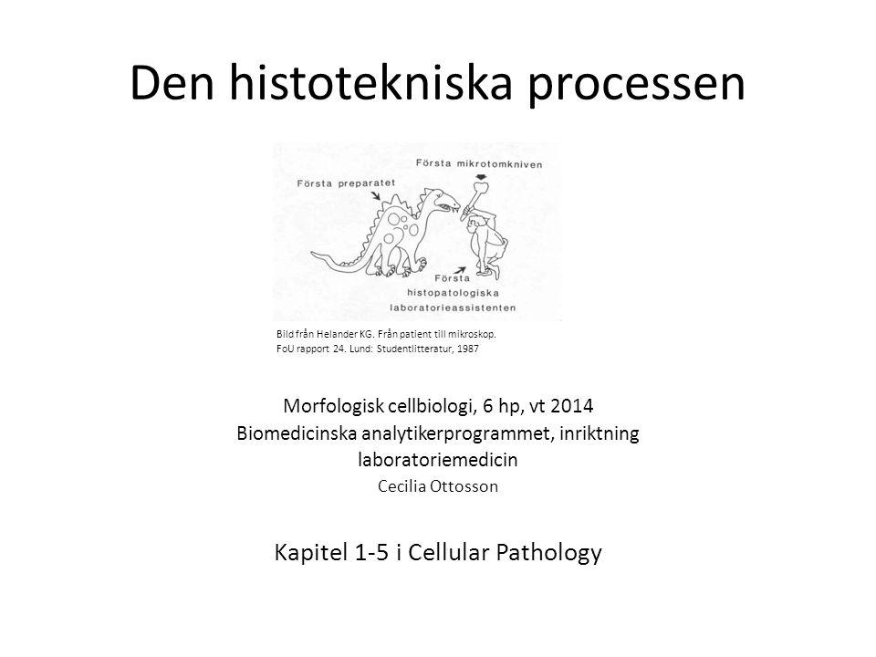 Den histotekniska processen Bild från Helander KG. Från patient till mikroskop. FoU rapport 24. Lund: Studentlitteratur, 1987 Morfologisk cellbiologi,