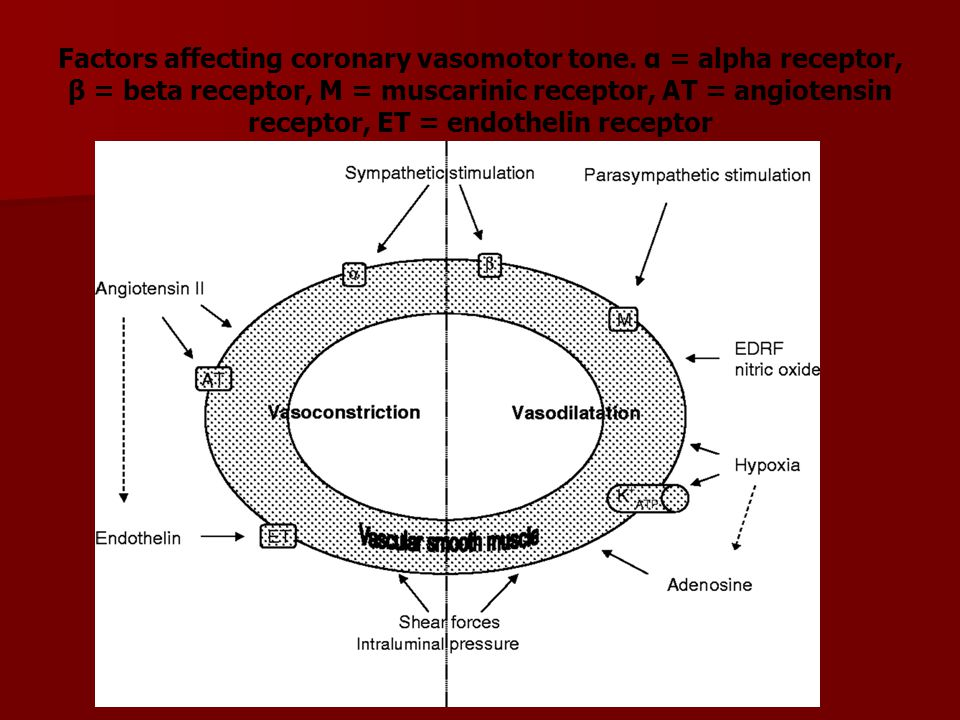 Factors affecting coronary vasomotor tone. α = alpha receptor, β = beta receptor, M = muscarinic receptor, AT = angiotensin receptor, ET = endothelin