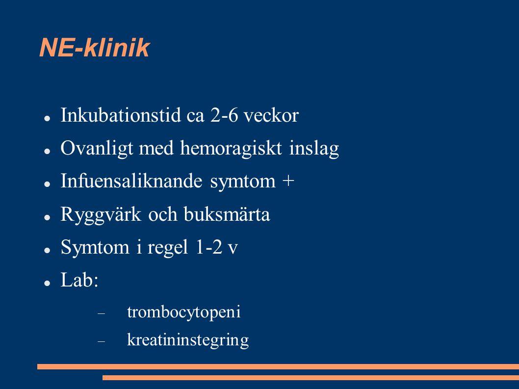 NE-klinik Inkubationstid ca 2-6 veckor Ovanligt med hemoragiskt inslag Infuensaliknande symtom + Ryggvärk och buksmärta Symtom i regel 1-2 v Lab:  tr