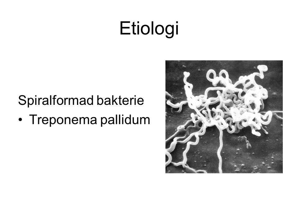 Etiologi Spiralformad bakterie Treponema pallidum