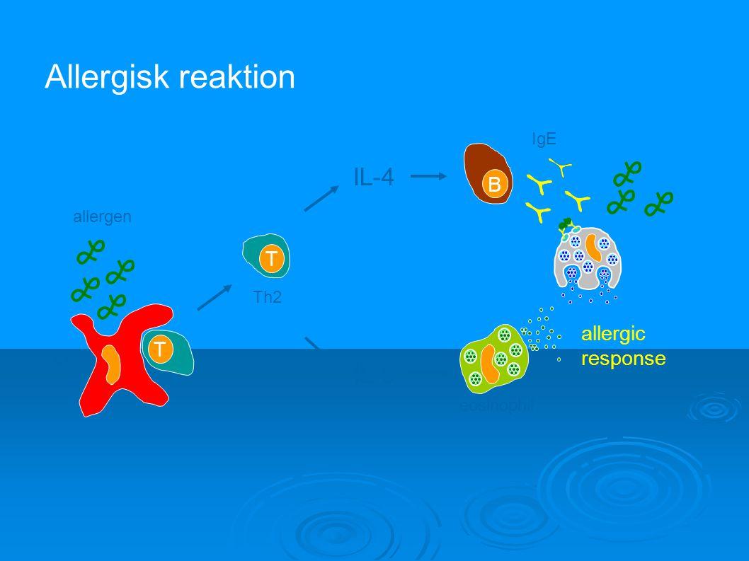 allergic response IL-4 IL-5 eosinophil IgE B T T Th2 APC allergen Allergisk reaktion
