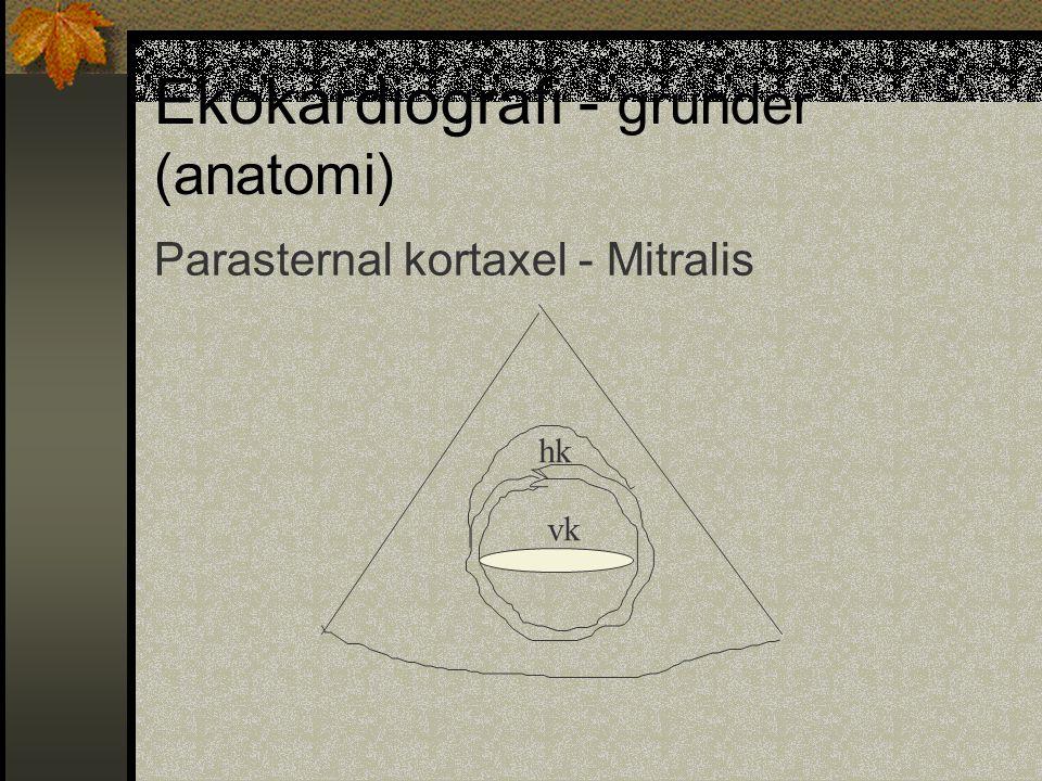 Ekokardiografi - grunder (anatomi) Parasternal kortaxel - Mitralis hk vk