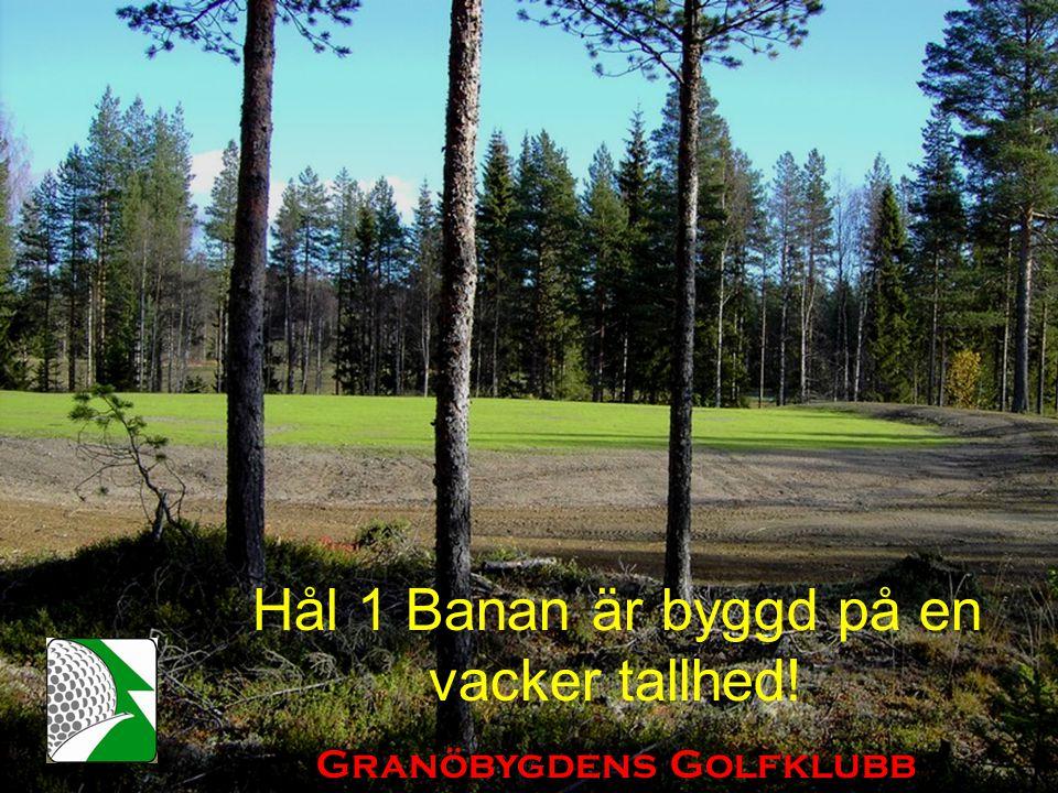 Hål 1 Banan är byggd på en vacker tallhed! Granöbygdens Golfklubb