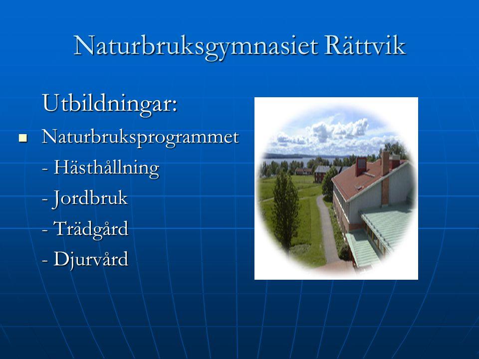 Naturbruksgymnasiet Rättvik Utbildningar: Naturbruksprogrammet Naturbruksprogrammet - Hästhållning - Jordbruk - Trädgård - Djurvård