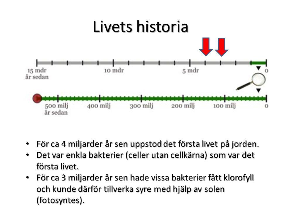 Livets historia Under den här tiden utvecklades musslor o andra djur med skal i havet.