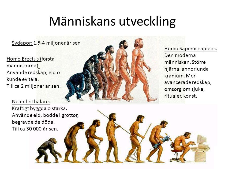 Människans utveckling Sydapor: 1,5-4 miljoner år sen Homo Erectus (första människorna): Använde redskap, eld o kunde ev tala.