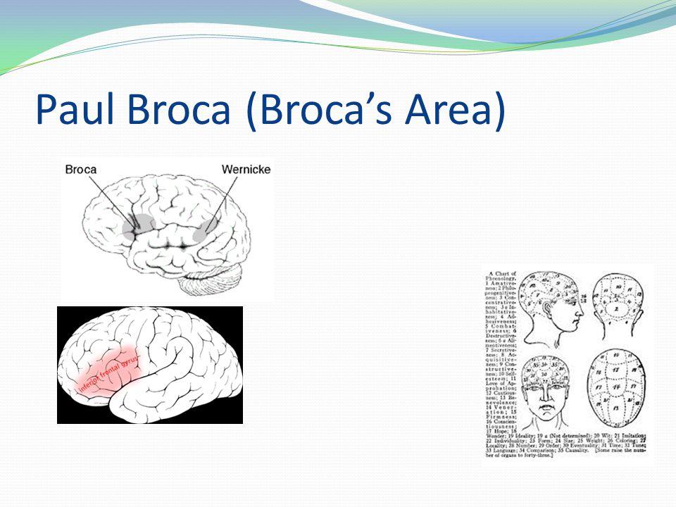 Paul Broca (Broca's Area)