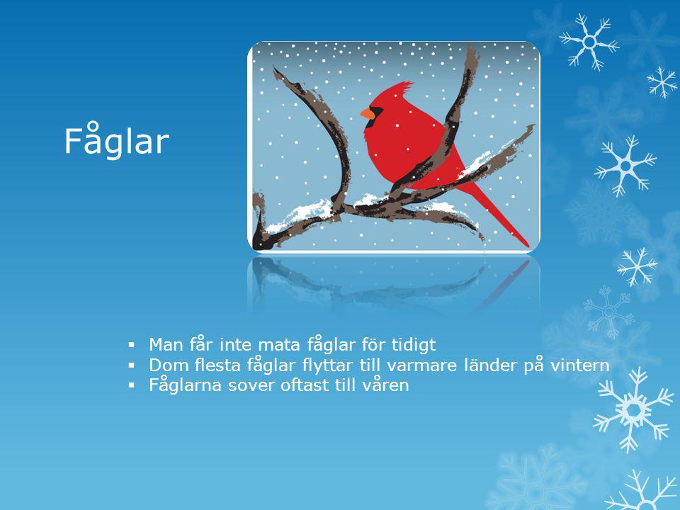  Man får inte mata fåglar för tidigt  Dom flesta fåglar flyttar till varmare länder på vintern  Fåglarna sover oftast till våren Fåglar