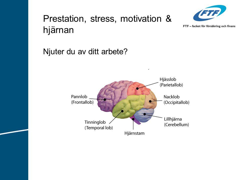 Prestation, stress, motivation & hjärnan Njuter du av ditt arbete?