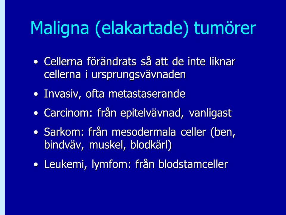 Maligna (elakartade) tumörer Cellerna förändrats så att de inte liknar cellerna i ursprungsvävnadenCellerna förändrats så att de inte liknar cellerna