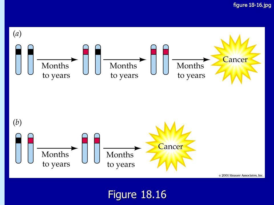 18.16 Figure 18.16 figure 18-16.jpg