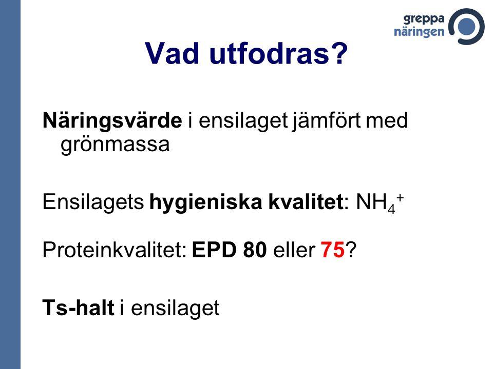 Vad utfodras? Näringsvärde i ensilaget jämfört med grönmassa Ensilagets hygieniska kvalitet: NH 4 + Proteinkvalitet: EPD 80 eller 75? Ts-halt i ensila