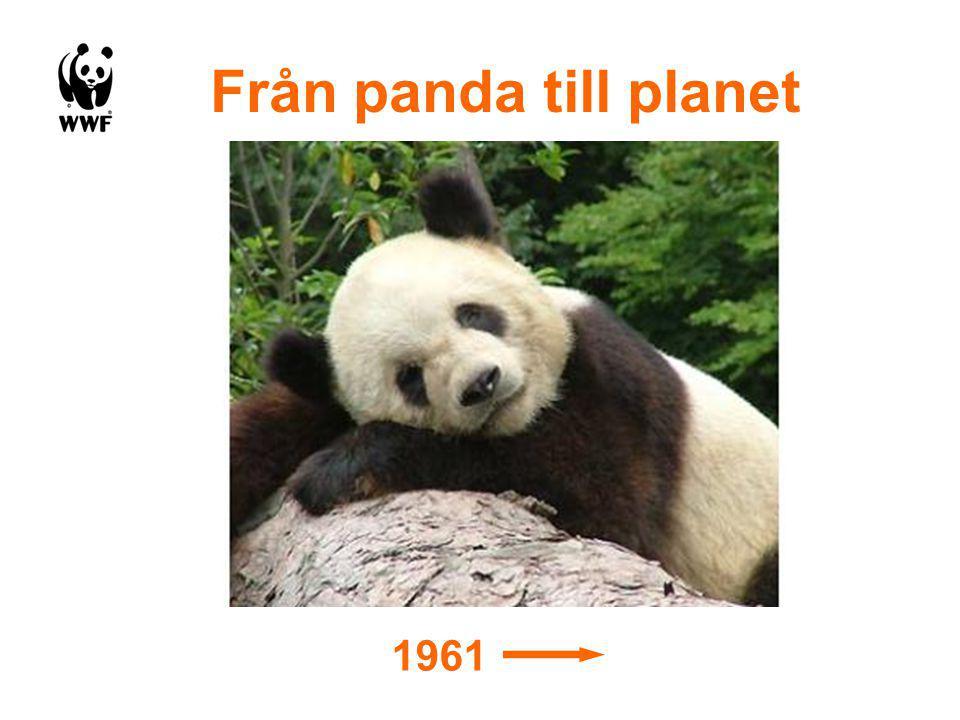 Panda 1961 Från panda till planet
