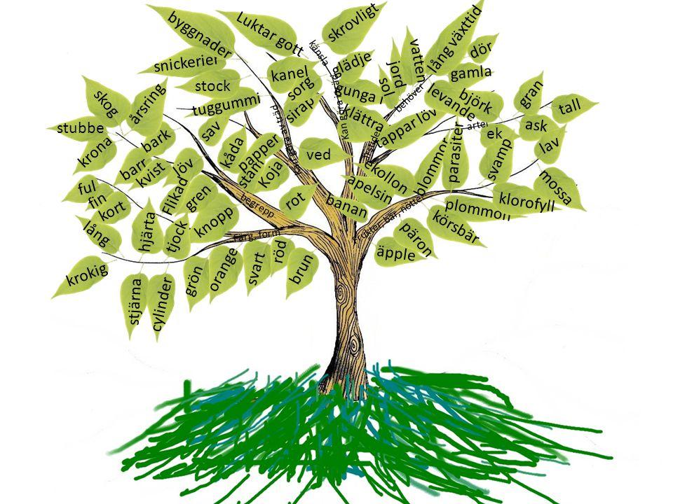 bark stam löv gren krona barr knopp rot årsring klättra i gunga i begrepp Färg, form svart röd brun orange grön tjock kåda sav kvist stubbe Flikad cyl