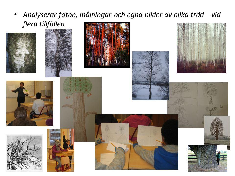 Läser faktatexter om träd samt lär in ord och begrepp Stam Krona Bark Knoppar Grenar Kvistar Löv Barr