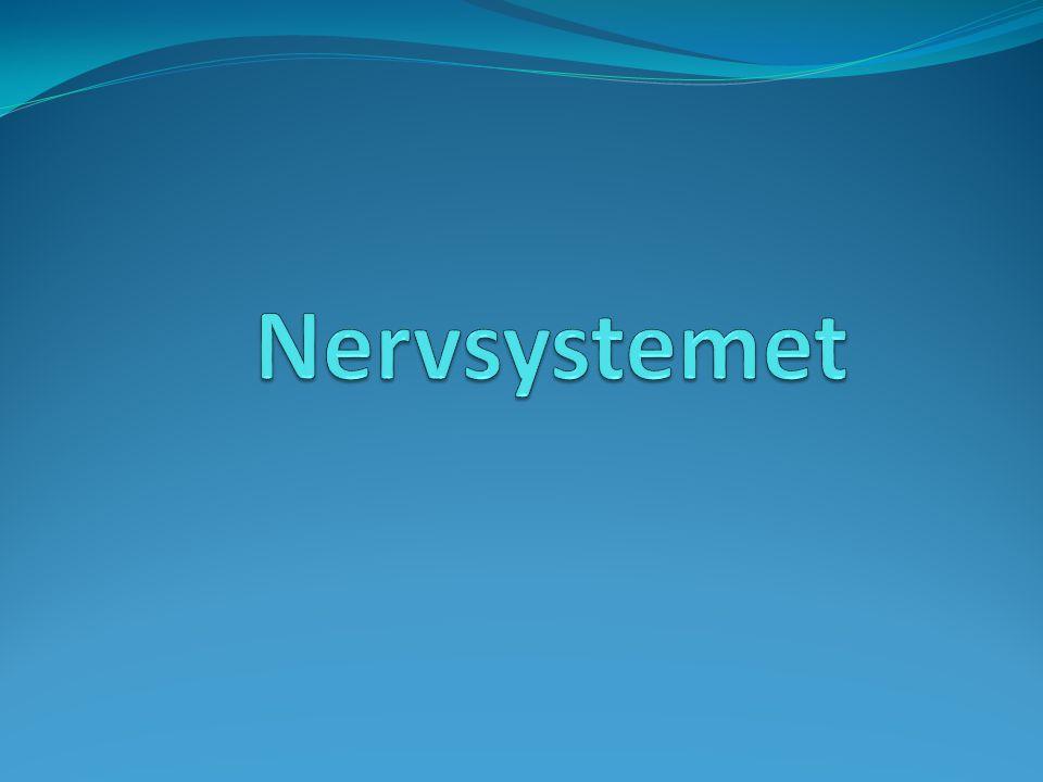 Sensor Nervsystemet