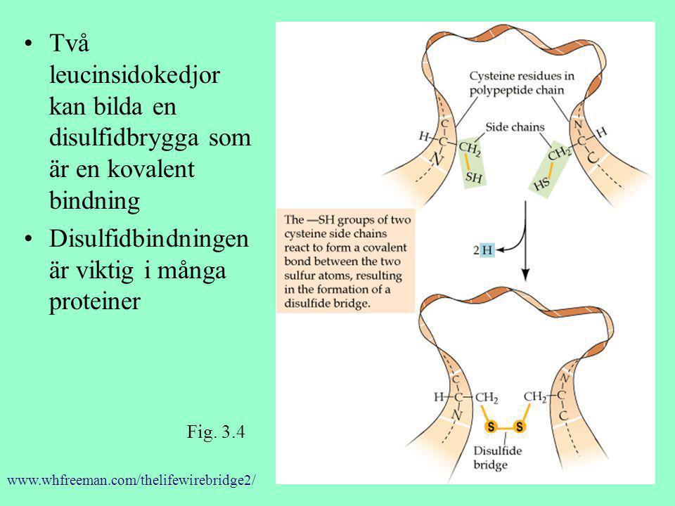 Två leucinsidokedjor kan bilda en disulfidbrygga som är en kovalent bindning Disulfidbindningen är viktig i många proteiner Fig. 3.4 www.whfreeman.com