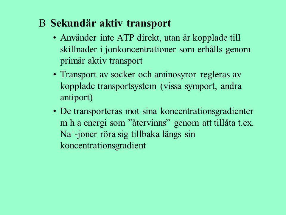 B Sekundär aktiv transport Använder inte ATP direkt, utan är kopplade till skillnader i jonkoncentrationer som erhålls genom primär aktiv transport Tr